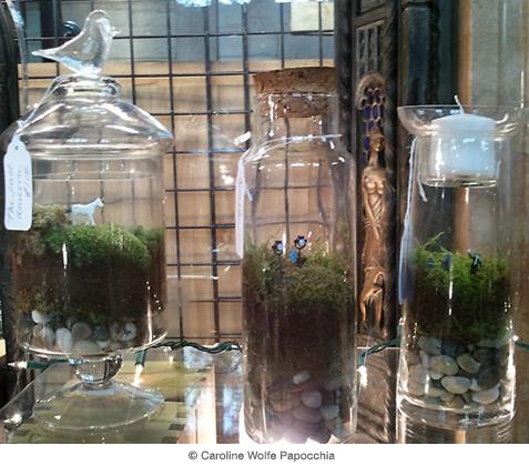 迷你玻璃花房(terrarium)的奥秘